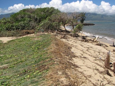Maui Tsunami Pictures Kanaha Beach Dunes