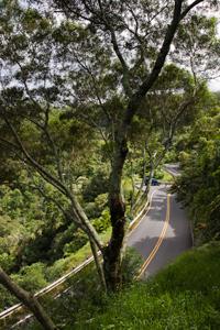 Hawaii Maui Facts Road to Hana